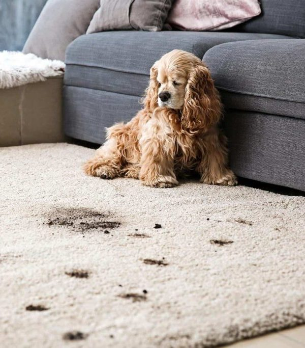Professional-Carpet-Upholstery-Cleaning-UK-1024x683.jpg canapeaok